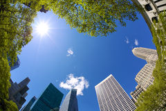 Bryant Park Skyscrapers Royalty Free Stock Image