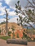 Bryce峡谷国家公园不祥之物 免版税图库摄影
