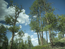 Bryce峡谷国家公园,犹他,美国 库存照片