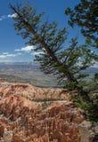 bryce峡谷形成岩石 库存照片
