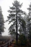 bryce峡谷森林 免版税库存照片