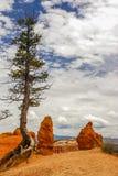 Bryce峡谷石峰 库存图片