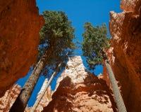 bryce εθνικό πάρκο φαραγγιών στοκ εικόνες