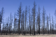 bryce μμένο δάσος φαραγγιών στοκ φωτογραφία με δικαίωμα ελεύθερης χρήσης