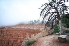 Bryce Canon Utah USA bänk och moln arkivbilder