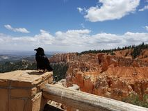 Bryce Canyon royalty-vrije stock foto's