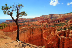 Bryce Canyon. National Park, Utah, USA Stock Images