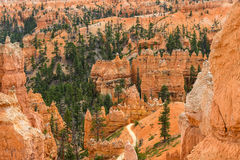 Bryce Canyon Royalty-vrije Stock Fotografie