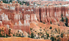 Bryce Canyon Stockbilder
