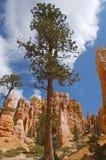 Bryce Canyon Lizenzfreie Stockbilder
