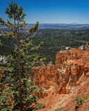 Bryce Canyon Royalty-vrije Stock Afbeelding