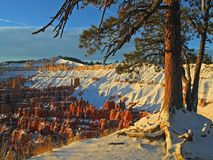 Bryce Canyon 7 Royalty Free Stock Images