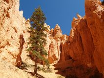 Bryce Canyon along Peekaboo trail Royalty Free Stock Photos