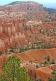 Bryce Canyon Ampitheatre 13. Rock columns called hoodoos formed from red sandstone, in Bryce Canyon, Utah Stock Photos
