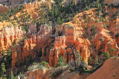 Bryce Canyon cliffs Stock Photos