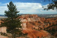 Bryce Canyon com uma árvore no primeiro plano Fotos de Stock