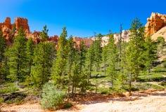 Bryce Canyon Etats-Unis Images libres de droits