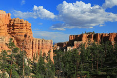 Bryce Canyon forest Royalty Free Stock Images