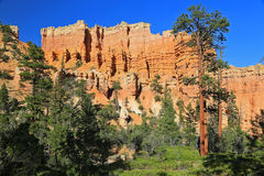 Bryce Canyon forest Stock Images