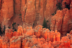 Bryce Canyon Glowing Stockbild