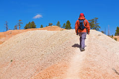 Bryce Canyon Hiker. A female hiker climbs a hill in Bryce Canyon, Utah Royalty Free Stock Image