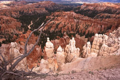 Bryce Canyon Hoodoos. This is a picture of hoodoos at Bryce Canyon National Park at the Bryce Amphitheater Royalty Free Stock Photography
