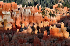Bryce Canyon Hoodoos Royalty Free Stock Images