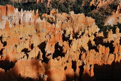 Bryce Canyon Hoodoos. Glowing hoodoos basking in late afternoon sunlight captured at Sunset Point, Bryce Canyon National Park, Utah Royalty Free Stock Image