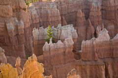Bryce Canyon hoodoos in the first rays of sun Royalty Free Stock Photography