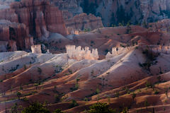 Bryce Canyon hoodoos in the first rays of sun Royalty Free Stock Photo