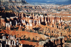 The Bryce Canyon Hoodoos, Utah, USA Stock Photography