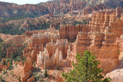 Bryce Canyon ; L'Utah ; Les Etats-Unis Photos libres de droits