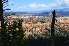 Bryce canyon landscape, USA. Bryce canyon landscape, scenic view of amphiteater, Utah, USA Stock Image