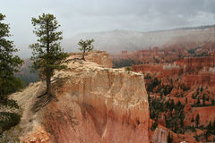 Bryce Canyon Ledge. Pine trees on a ledge of Bryce Canyon National Park, Utah, USA Stock Image