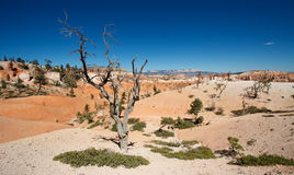 Bryce Canyon National Park. Desert Stock Images