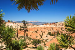 Bryce Canyon National Park. A View from Bryce Canyon National Park, Utah royalty free stock photos
