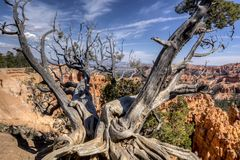 Bryce Canyon National Park Stock Photos