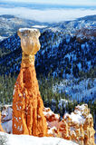 Bryce Canyon National Park Royaltyfri Bild