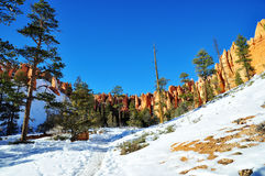 Bryce Canyon National Park Arkivbild