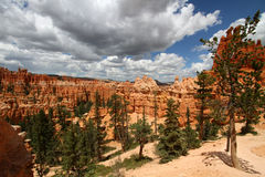 Bryce Canyon National Park Royalty-vrije Stock Afbeelding