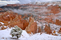 Bryce Canyon National Park, de V.S. royalty-vrije stock afbeelding