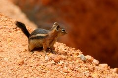 Bryce Canyon National Park is een Nationaal Park van Verenigde Staten in de Canionland van Utah royalty-vrije stock foto