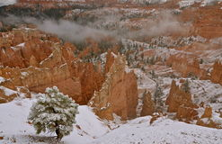 Bryce Canyon National Park i vinter, Utah Royaltyfri Fotografi