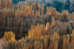 Bryce cayon glows in the early morning light. Bryce canyon national park iconic hoodoos colors light up in early morning sun Royalty Free Stock Photography