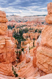 Bryce Canyon National Park, landscape of eroded pink and orange pinnacles Royalty Free Stock Images