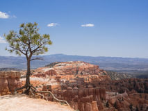 Bryce Canyon National Park with pine in the foreground. Panorama view of Bryce Canyon National Park with pine in the foreground Stock Image