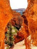 Bryce Canyon National Park Royalty Free Stock Photos