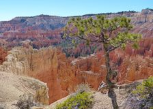 Bryce Canyon National Park Scenic Fotografia Stock