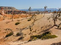 Bryce Canyon National Park Trees Royalty Free Stock Images