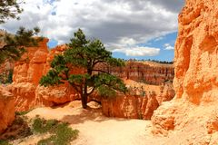 Bryce Canyon National Park is a United States National Park in Utah`s Canyon Country. royalty free stock photo